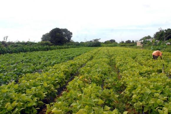 Vista de plantação