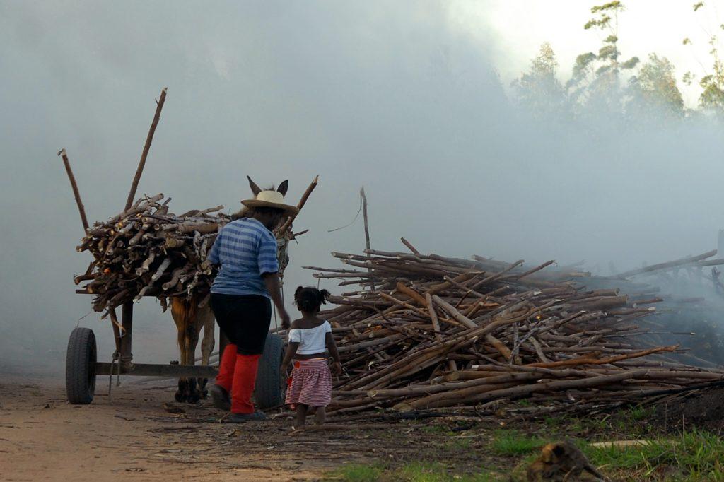 Trabalho infantil no campo. Crédito: Agência Brasil
