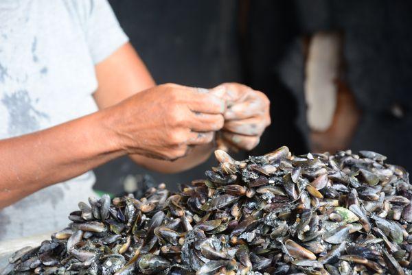 Marisqueiras em Alagoas. (Crédito: Divulgação MPT/AL)